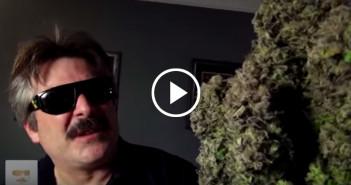 Kilka największych kwiatów marihuany jakie kiedykolwiek widziałeś