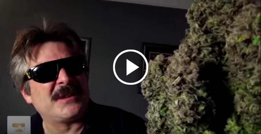 Najwieksze na swiecie kwiaty/topy marihuany