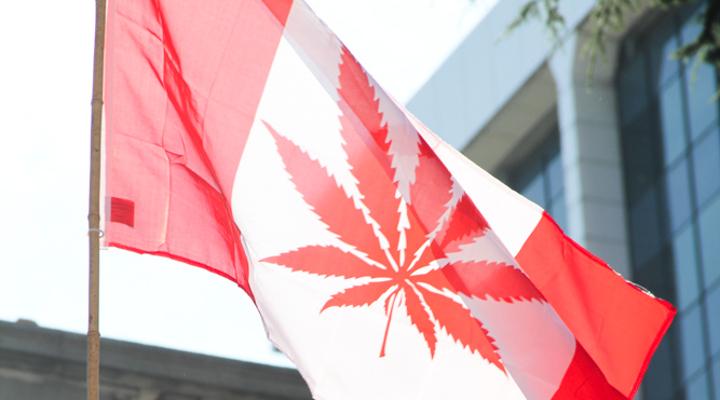 Kanada legalizuje marihuanę do celów rekreacyjnych