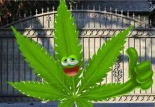 Marihuana nie jest furtką do narkotykó