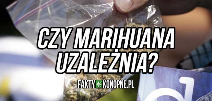 Czy marihuana uzależnia?