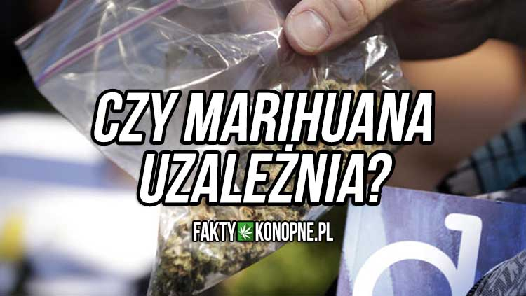 marihuana uzaleznienie