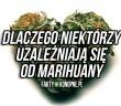 dlaczego niektorzy uzalezniaja sie od marihuany