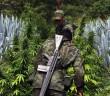 Legalizacja marihuany w Meksyku?
