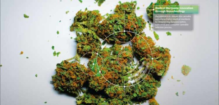 PotBotics przeanalizuje Twój mózg i wybierze idealną odmianę marihuany dla Ciebie
