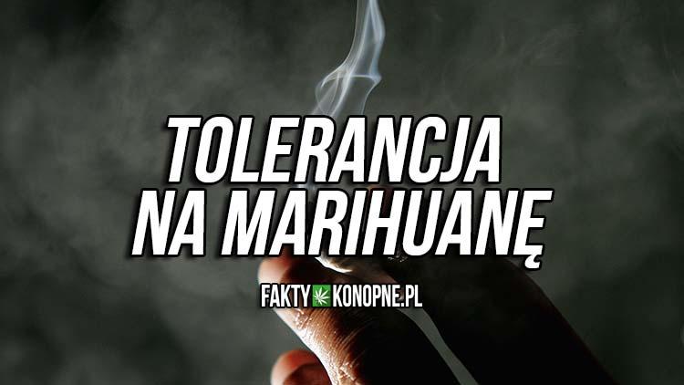 tolerancja na marihuane