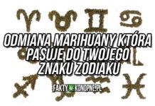 Odmiana marihuany która pasuje do znaku zodiaku