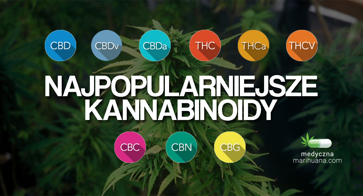 kannabinoidy w marihuanie