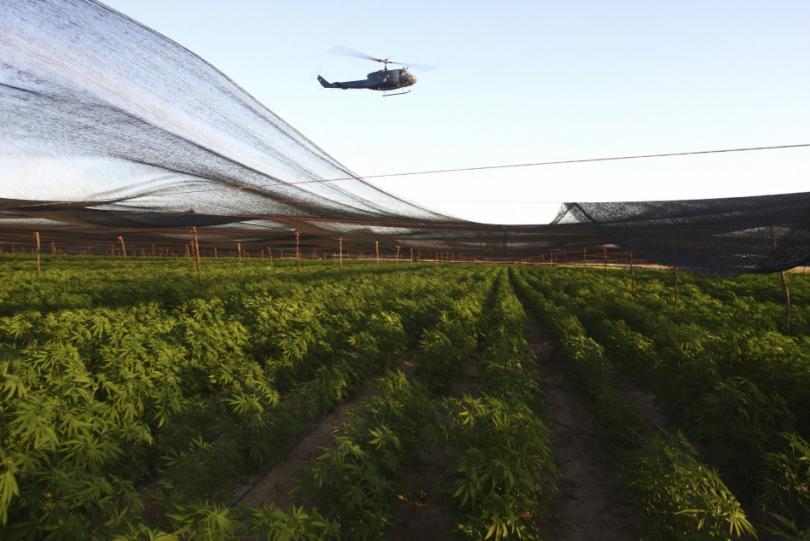 największa na świecie plantacja marihuany
