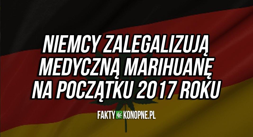 niemcy zalegalizuja medyczna marihuane w 2017 roku