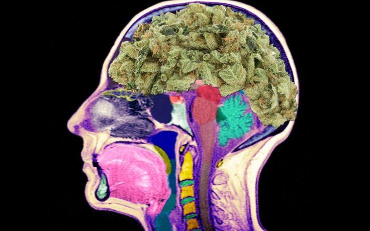 wpływ długotrwałego palenia marihuany na mózg