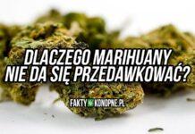 naukowcy wyjasniaja dlaczego nie da sie przedawkowac marihuany