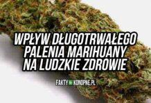 wpływ długotrwałego palenia marihuany na ludzkie zdrowie