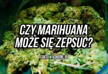 czy marihuana moze sie zepsuc - poradnik jak przechowywac marihuane
