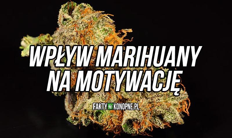 wpływ marihuany na motywacje