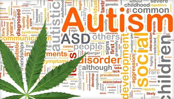 izraelski lekarz będzie badał wpływ medycznej marihuany na autyzm