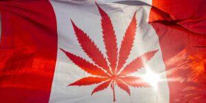 Do 2020 roku Kanada będzie produkować nawet 3 miliony kilogramów marihuany