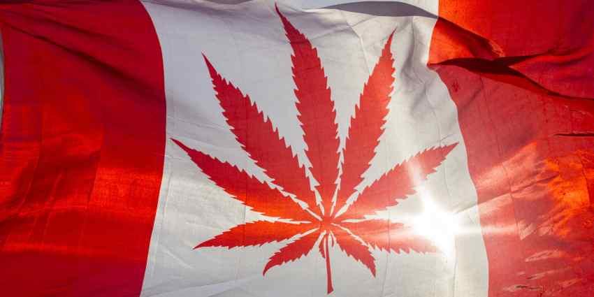 pacjenci w kanadzie będą mogli uprawiać medyczną marihuanę w domu