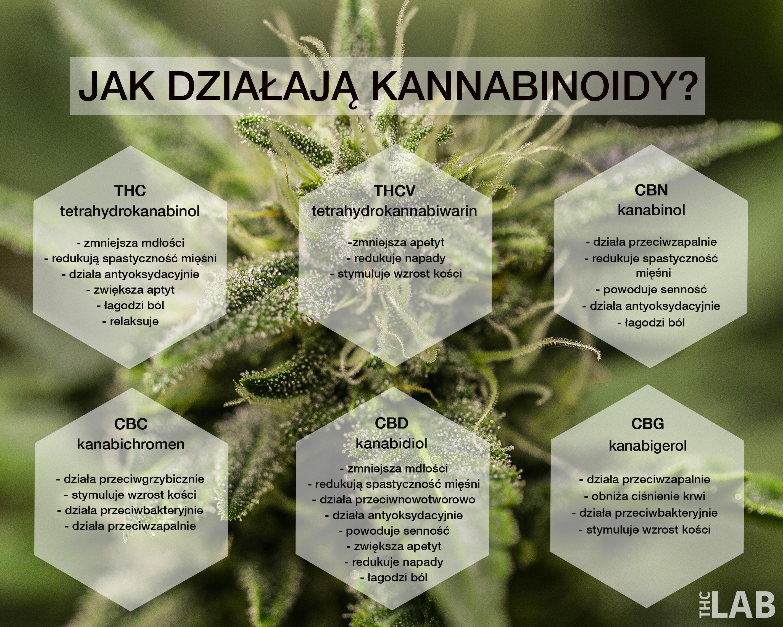 kannabinoidy_thc_lab