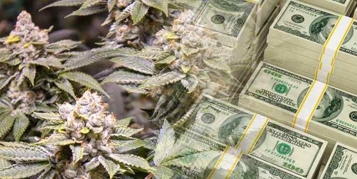 Średnia dzienna sprzedaż marihuany