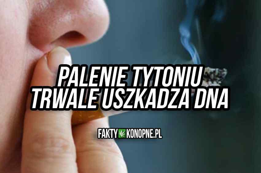 palenie tytoniu trwale uszkadza DNA