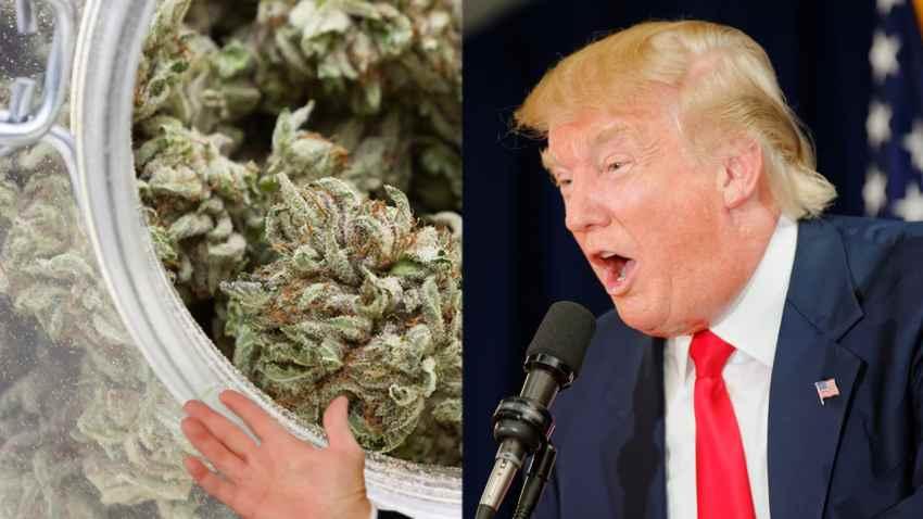 stosunek Donalda Trumpa do marihuany