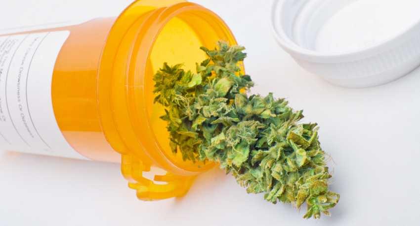 Rząd zalegalizuje medyczną marihuanę
