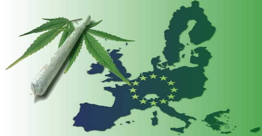 Trwają prace nad legalizacją marihuany w Unii Europejskiej