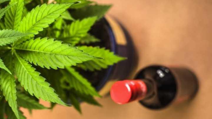 mieszanie alkoholu z marihuaną zwiększa stężenie THC we krwi