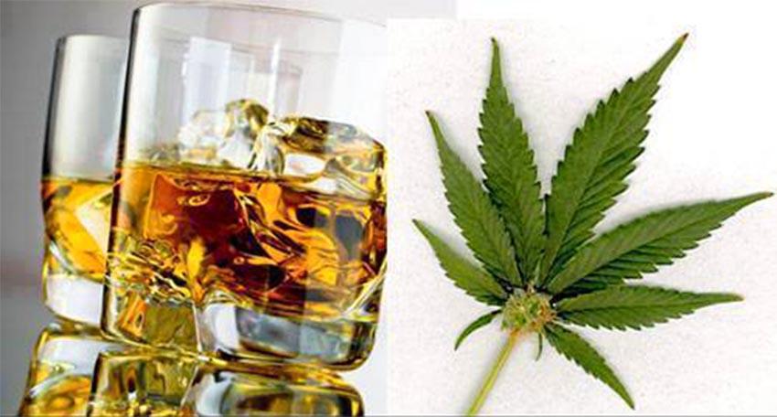 Wpływ legalizacji marihuany na sprzedaż alkoholu