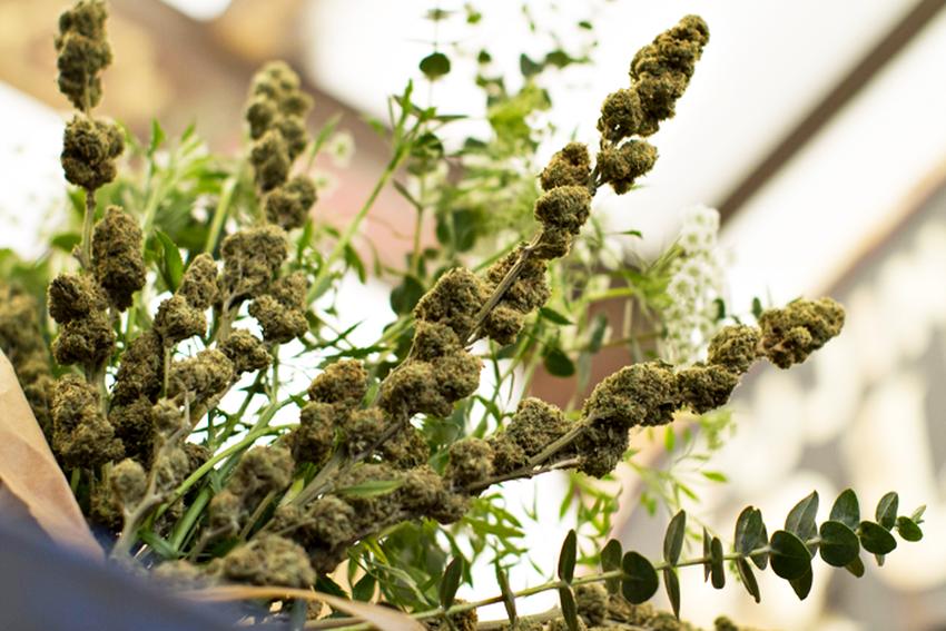 bukiet z marihuany