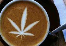 aby przedawkować marihuanę należałoby spalić 2,1kg marihuany naraz