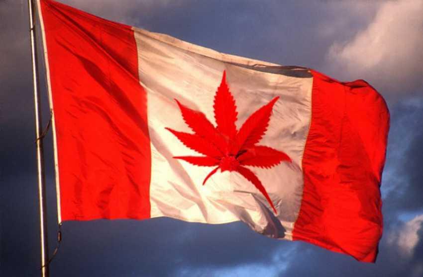 kanada zalegalizuje marihuane w 2018 roku