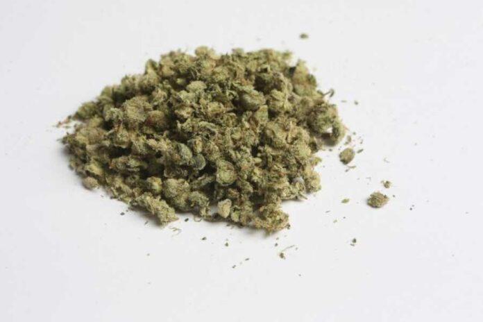 Tak właśnie wygląda marihuana używana do badań naukowych