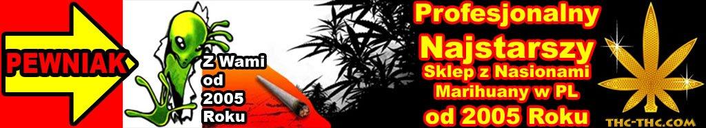 nasiona marihuany, nasiona konopi, sklep, stacjonarny, cannabis, thc, thc-thc, marihuana nasiona