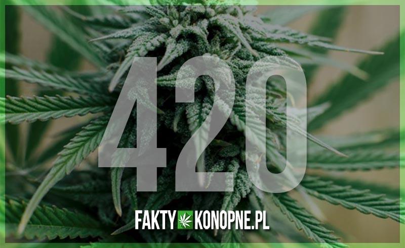 420 historia pochodzenia święta palaczy marihuany 20 kwietnia