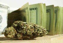 fot. marijuanastocks.com