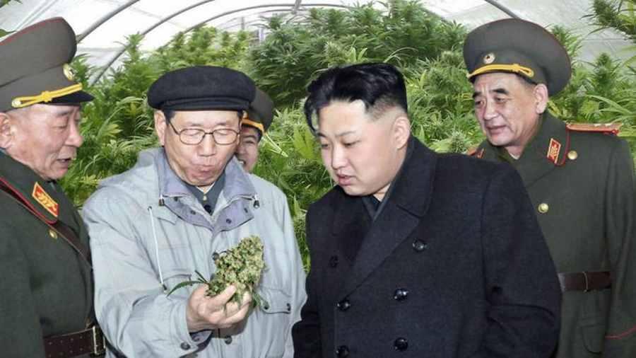 Korea Północna bdzie uprawiała konopie jako paliwo dla dronów