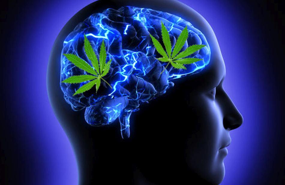 Przerwa od używania marihuany znacząco poprawia pamięć