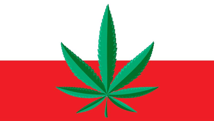 Polska w czołówce palaczy marihuany