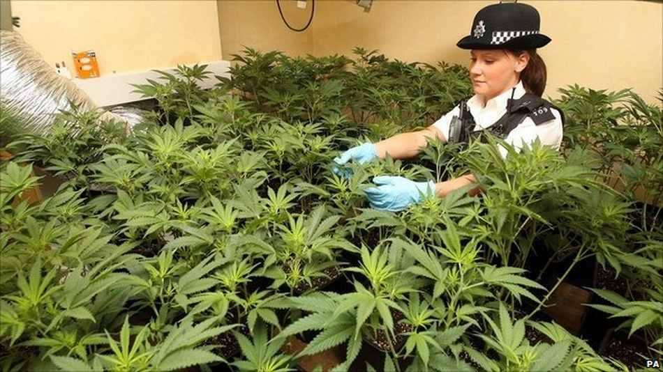 Policjanci w Wielkiej Brytanii tracą milion godzin rocznie na egzekwowanie prawa związanego z mariuhaną