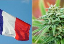 Francja zdekryminalizuje mariuhanę
