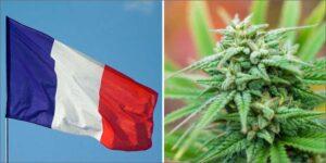 Francuscy pacjenci mogą wkrótce mieć dostęp do medycznej marihuany