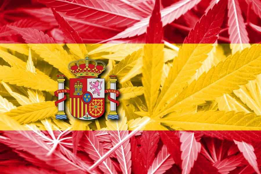 Katalonia zalegalizowała uprawę i konsumpcję marihuany