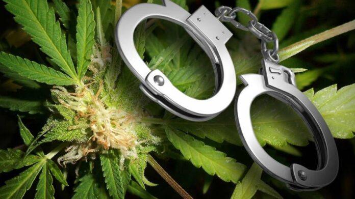 legalizacja marihuany związana ze spadkiem przestępczości