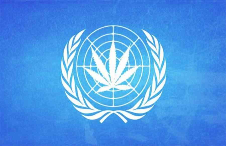Organizacja Narodów Zjednoczonych i Światowa Organizacja Zdrowia wzywają do dekryminalizacji narkotyków