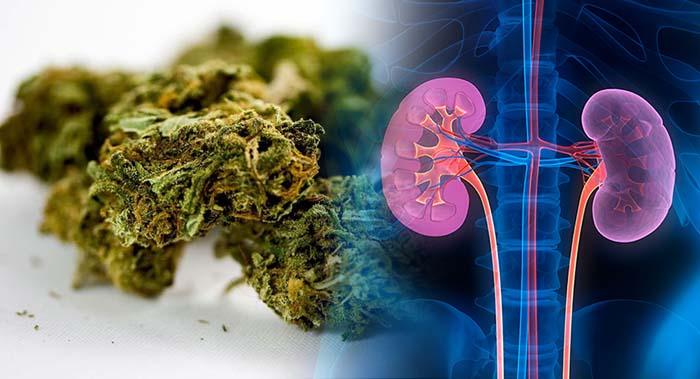 wpływ marihuany na nerki