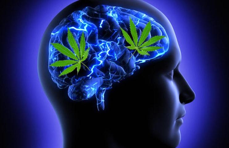 Używanie marihuany może poprawić pamięć roboczą