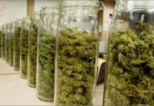 najlepsze-sposoby-jak-przechowywać-marihuane