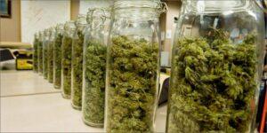 Najlepsze sposoby na przechowywanie marihuany
